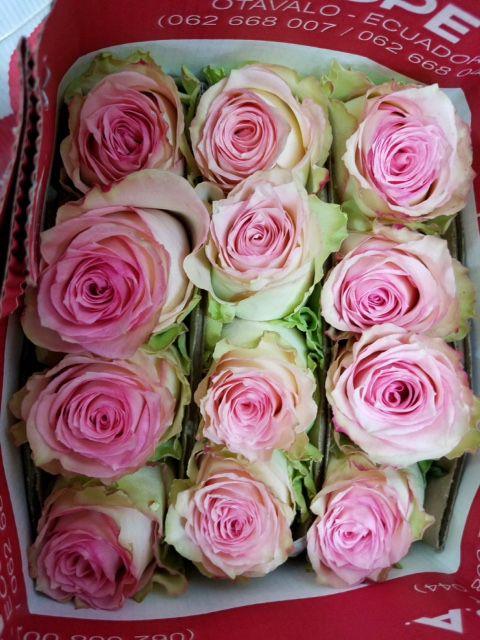 Nordlie detroit mi kennicott brothers company roses in bulk at nordlie detroit mightylinksfo
